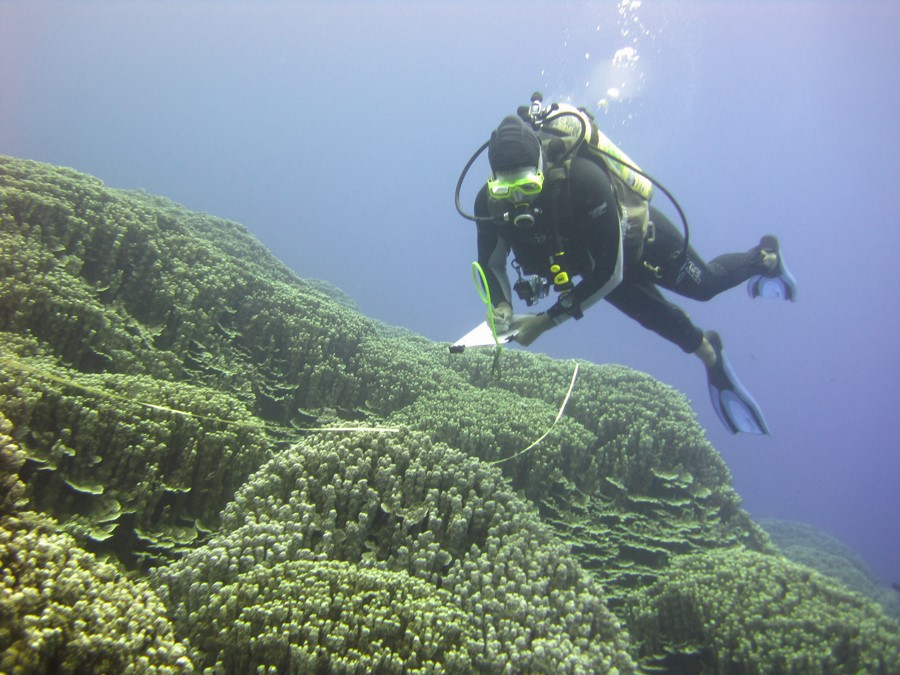 ClientEarth believes that fragile ecosystems like the ocean can be protected through law