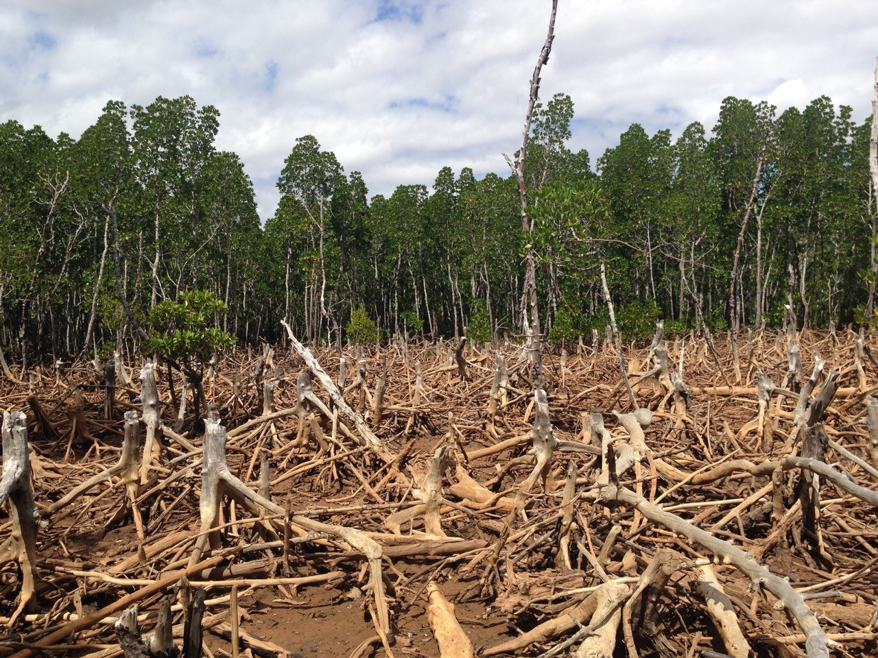 Deforestation is recognised as a big environmental problem